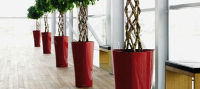 Planter til krukker indendørs